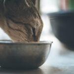 karma rybna dla kota
